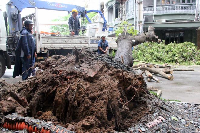 Sài Gòn mưa lớn, cây xanh bật gốc giữa trung tâm