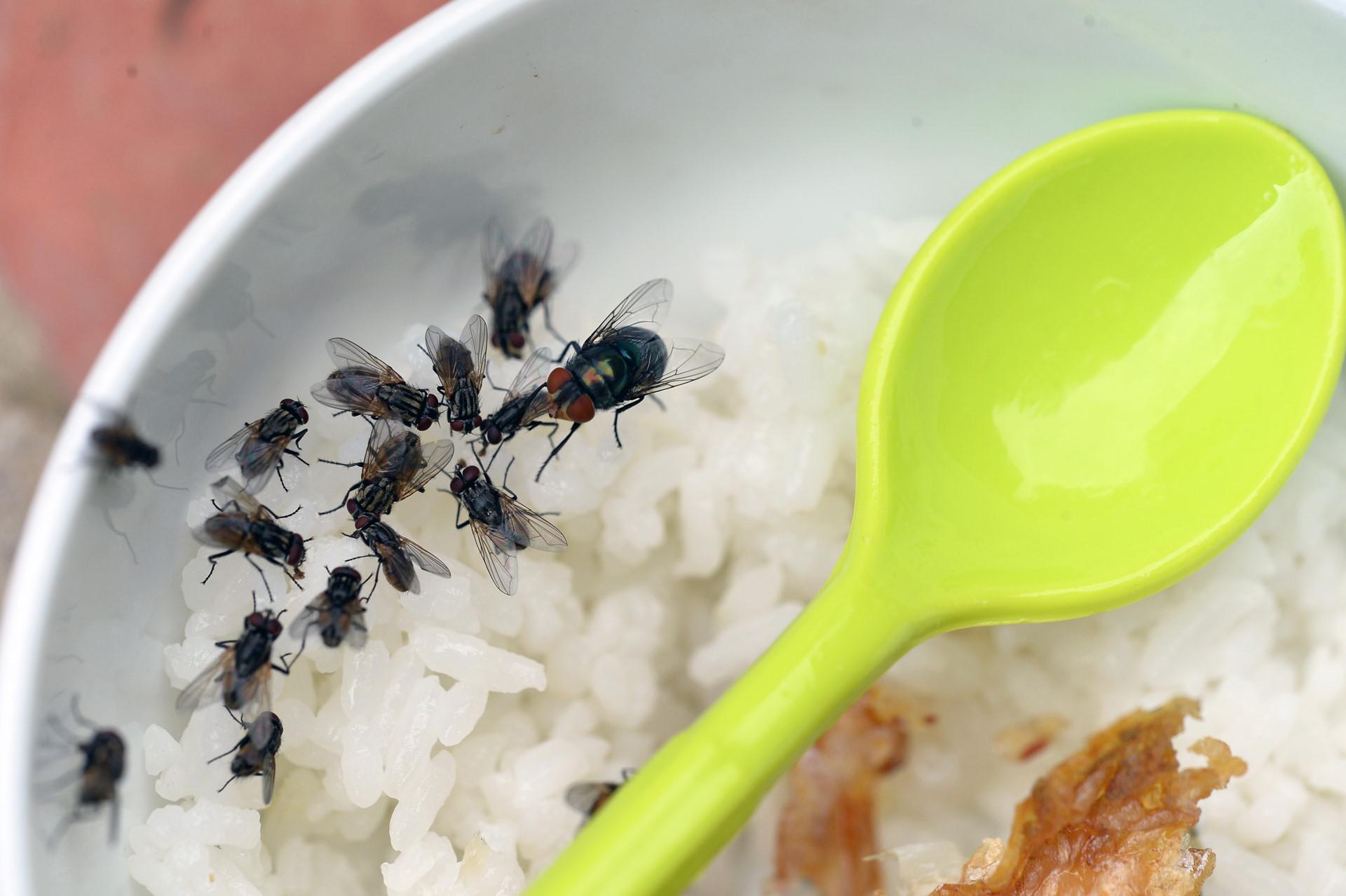 Mắc màn ăn cơm tránh hàng triệu con ruồi tấn công