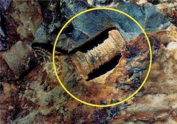 Tìm thấy ốc vít 300 triệu tuổi: Liệu có phải vết tích của người ngoài hành tinh?