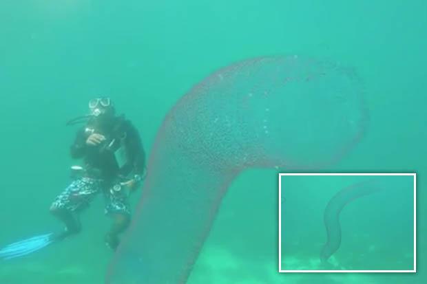 """""""Quái vật ngoài hành tinh"""" dài 20m dưới biển sâu"""