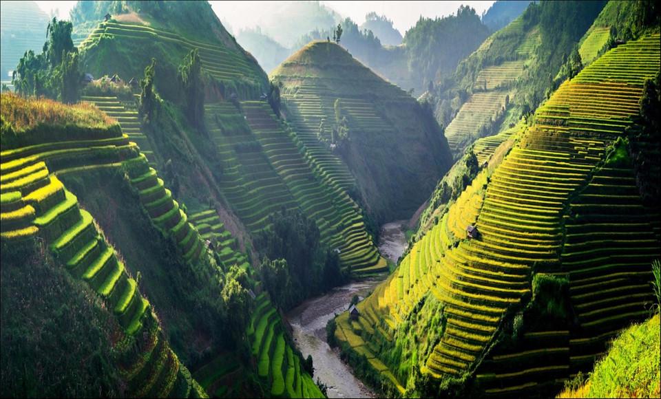 """Tây Bắc mùa lúa chín rực rỡ sắc vàng trong ảnh """"Dấu ấn Việt Nam"""""""
