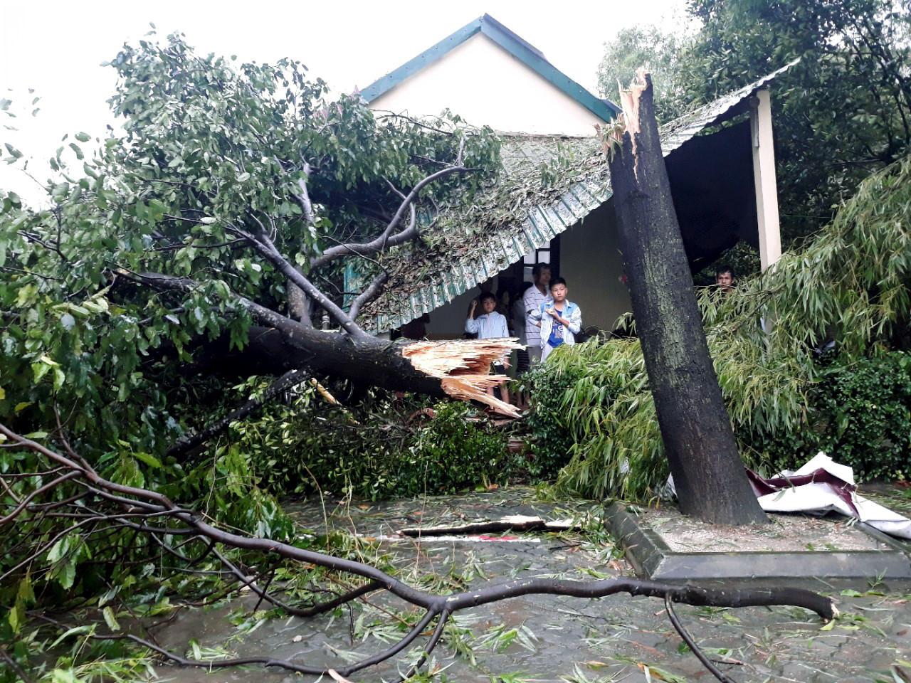 Hàng trăm nhà tốc mái, cây gãy đổ trước bão