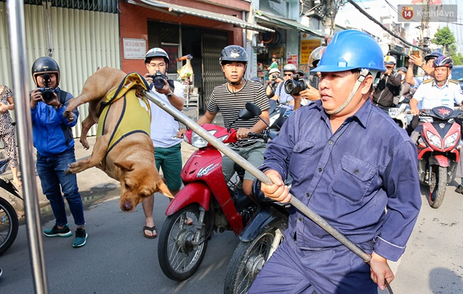 Toàn cảnh quy định tiêu hủy chó thả rông