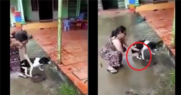 Cư dân mạng phẫn nộ tìm kiếm danh tính người phụ nữ dùng dao chặt chân chú chó tội nghiệp