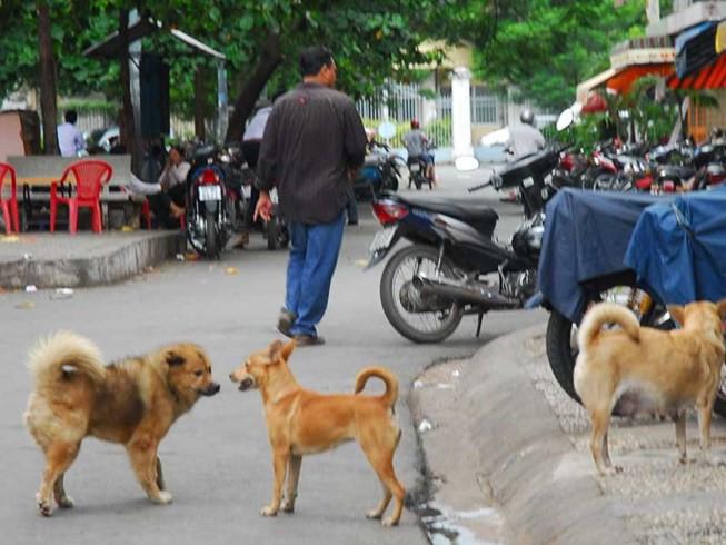 Dân TP.HCM mất hơn 26 tỷ/năm do chó cắn