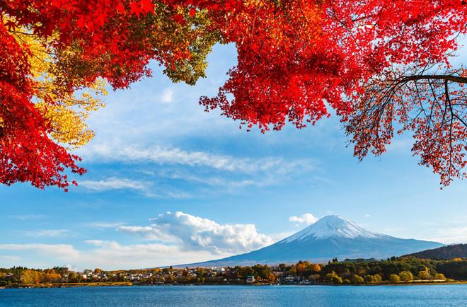 Tại sao lá cây ở Nhật chuyển màu đỏ vào mùa Thu?