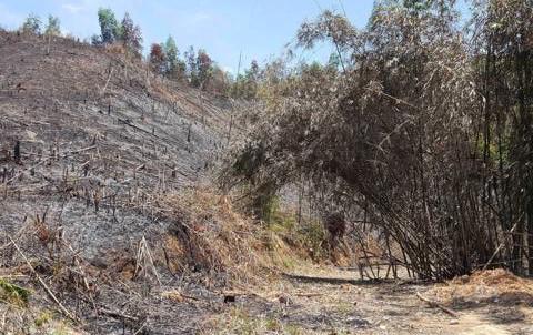 """Mất sạch 135 ha rừng tự nhiên sau khi làm nơi """"diễn tập phòng thủ"""""""