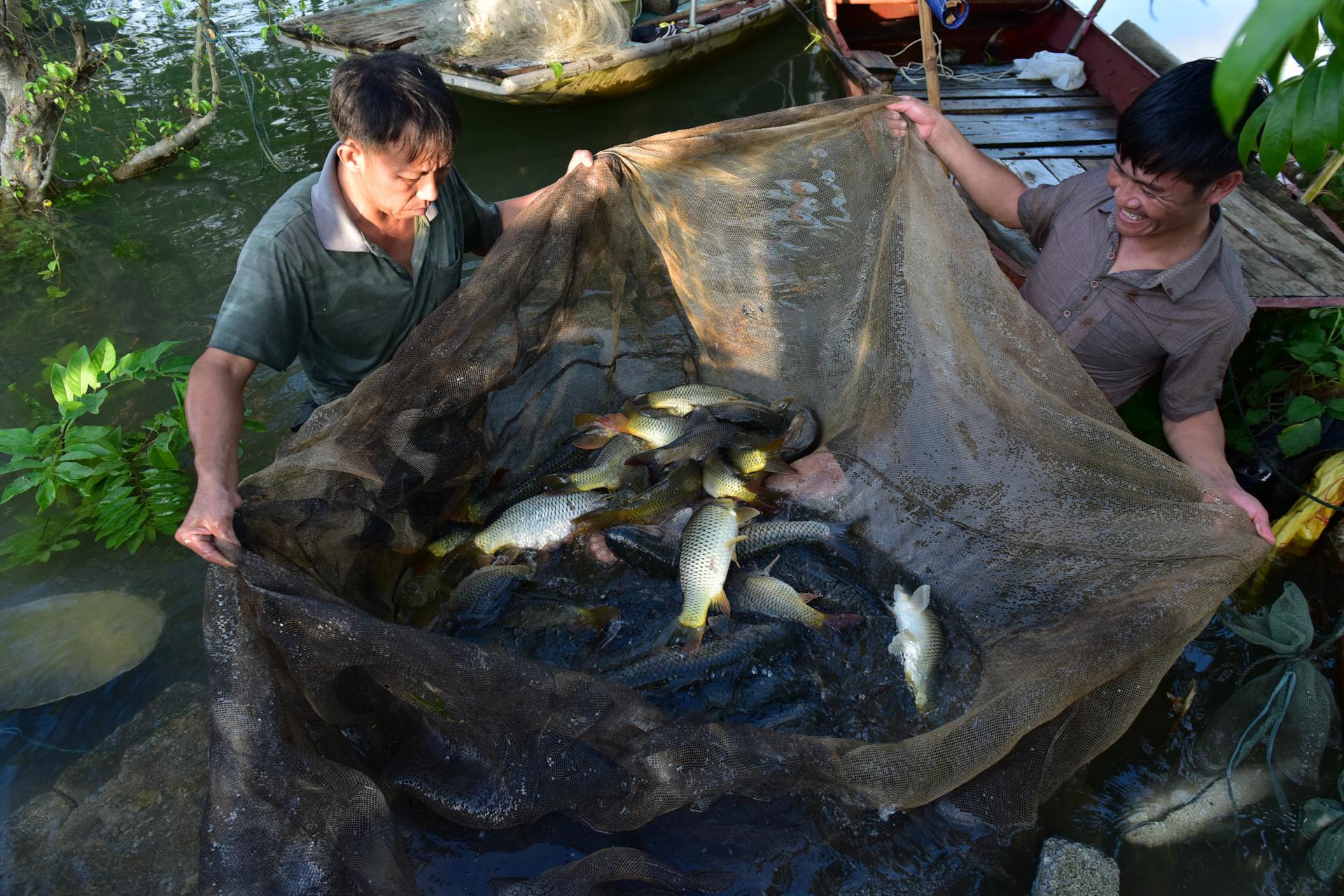 Bắt cá mỏi tay trong nước lũ