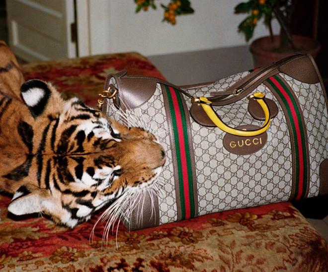 Gucci tuyên bố không sử dụng lông thú trong bộ sưu tập mới