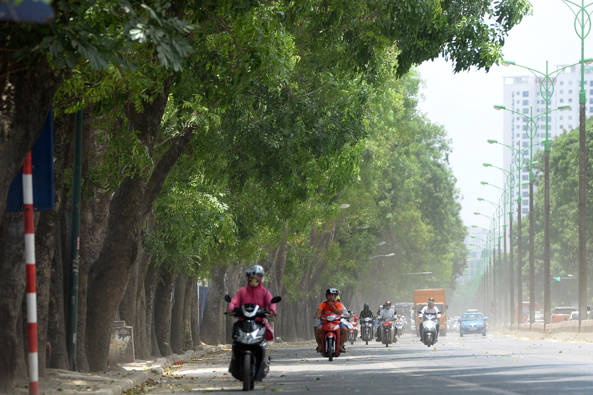 Hà Nội di chuyển, chặt hạ gần 1.300 cây xanh vào ngày mai