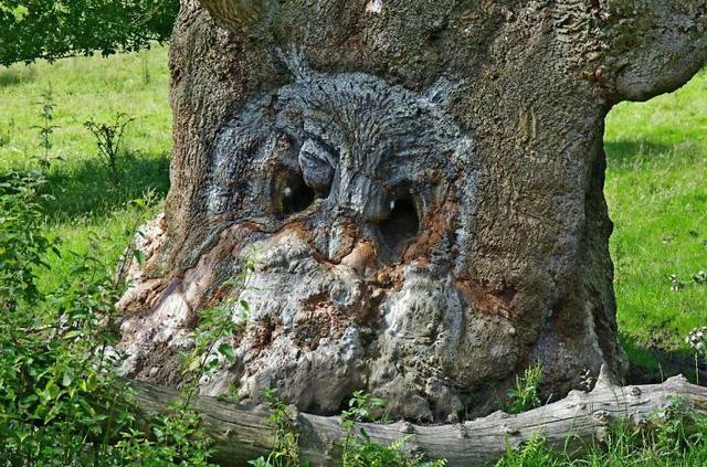 Những cây cổ thụ hình thù kỳ quái khiến bạn phải giật mình