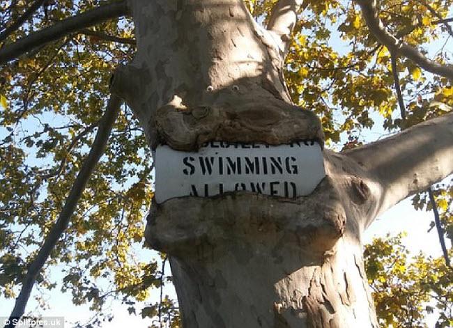 Khi cây trở thành… quái vật
