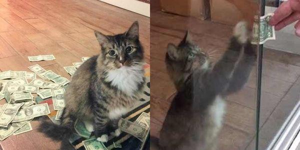Nhận nuôi mèo hoang, người đàn ông bất ngờ vì liên tục nhận được tiền