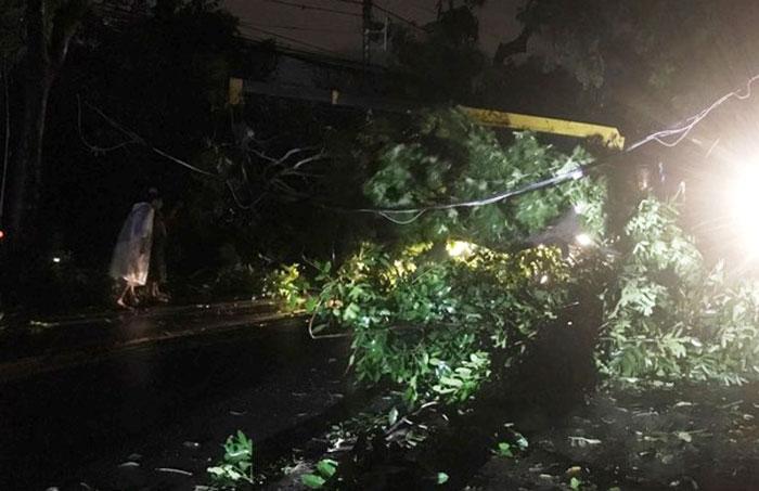 TP.HCM mưa lớn trước bão số 14, đường ngập, cây đổ