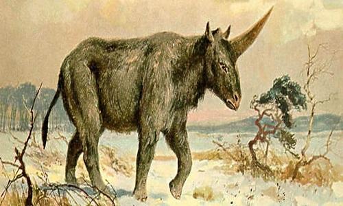 Hộp sọ nguyên vẹn 29.000 năm của kỳ lân một sừng