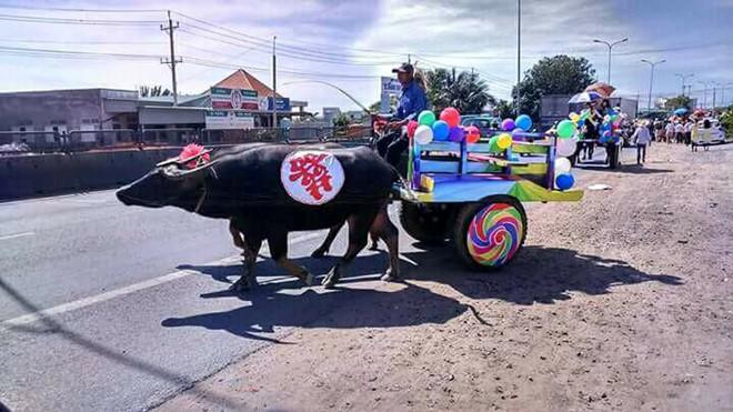 Chú rể Bình Thuận rước dâu bằng đoàn xe trâu kéo