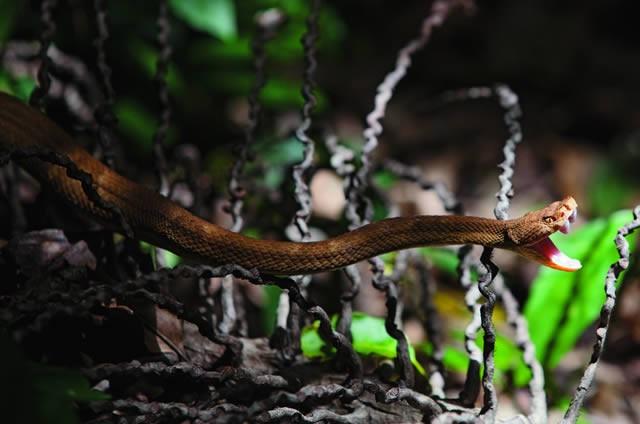 Đảo rắn độc đáng sợ ở Brazil