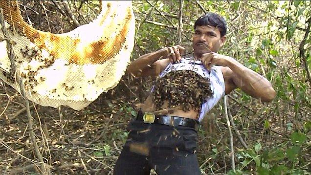 Dị nhân Ấn Độ miễn dịch với nọc ong