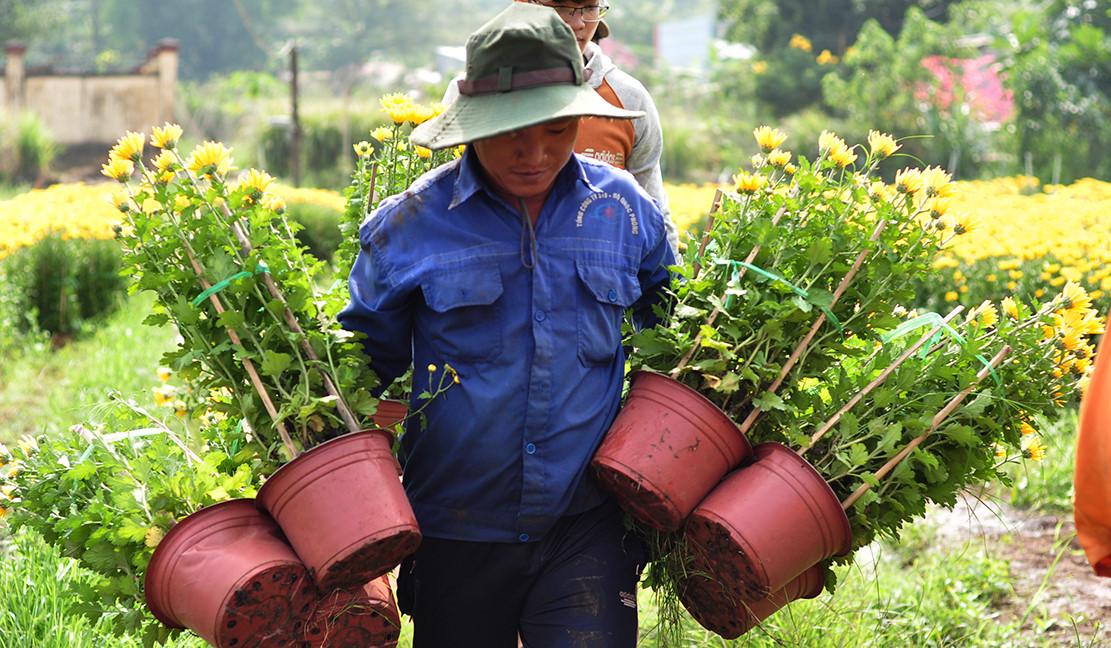 Oằn mình vác hoa từ sáng tới chiều lấy 200.000 đồng tiêu Tết