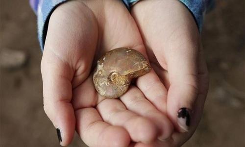 Bé gái 7 tuổi tìm thấy hóa thạch 65 triệu năm ở Mỹ