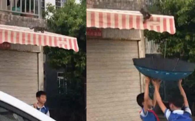 Hai nam sinh tiểu học dùng ô cứu chú mèo con bị mắc kẹt