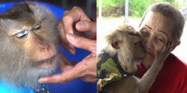 Chú khỉ mang về tiền triệu cho người chủ già mỗi ngày để trả ơn
