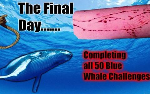 """Người sống sót từ """"Cá voi xanh"""": Giãy giụa thoát chết vào ngày thứ 50"""