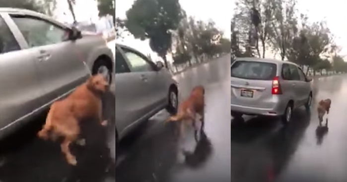 CĐM phẫn nộ trước hình ảnh chú chó bị chủ kéo đi dưới mưa