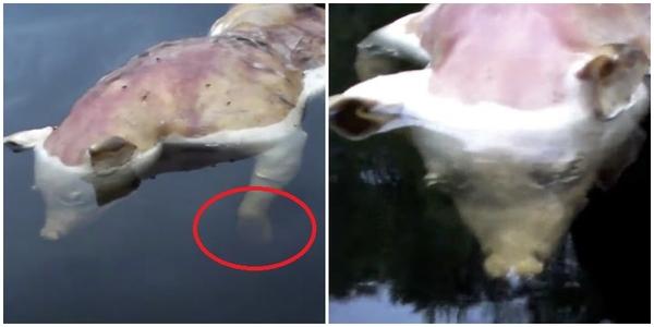 Phát hiện sinh vật lạ có đầu lợn tay người ở Mỹ