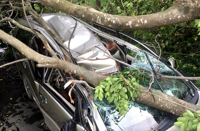 Cây ngã đè bẹp ô tô ở Sài Gòn, tài xế thoát chết trong gang tấc