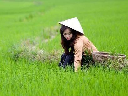 Chàng trai bị 'ném đá' vì chê con gái quê không biết gặt và cấy lúa