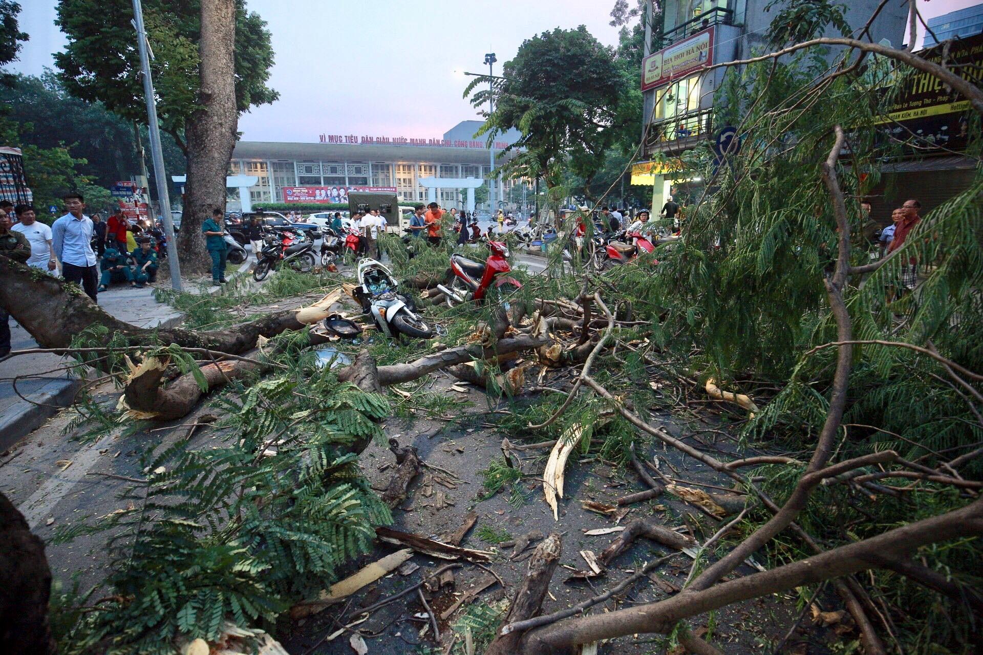 Cây cổ thụ đổ giữa phố ở Hà Nội, 5 người nhập viện