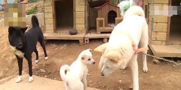 Cảm động câu chuyện hai chú chó lớn chăm sóc cho chú cún con bị lạc