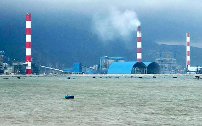 Cá nuôi lồng bè gần Nhiệt điện Vĩnh Tân chết hàng loạt