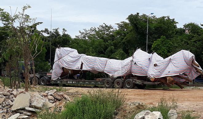 Truy tìm tài xế xe tải chở cây cổ thụ dài 25 m