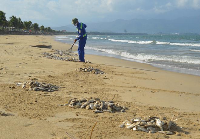 Cá chết hàng loạt dạt vào bờ biển Đà Nẵng