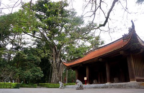 18 cây di sản hàng trăm tuổi ở khu di tích Lam Kinh