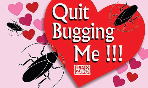 Quà Valentine 'bá đạo': Lấy tên người yêu cũ đặt cho côn trùng, động vật