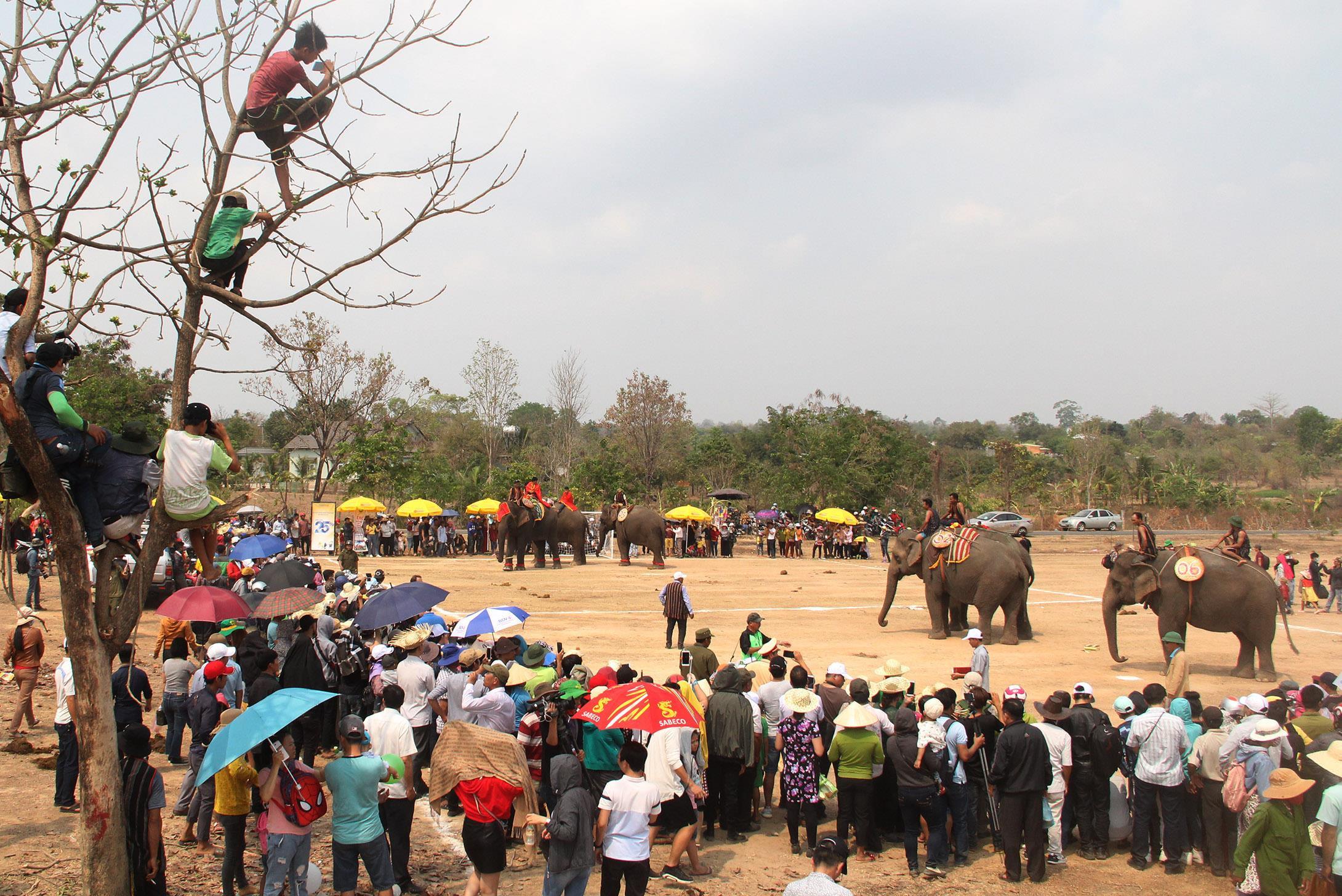 Khán giả trèo lên cây xem voi đá bóng giữa trưa