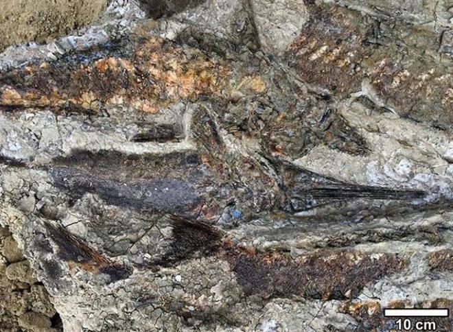 Hóa thạch tiết lộ thảm họa toàn cầu khiến khủng long tuyệt chủng