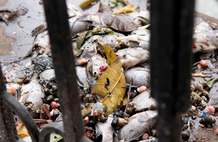 Cá chết hàng loạt ở hồ Văn Chương