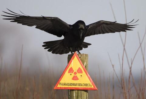 Cảnh tượng khó tin tại 'vùng chết chóc' ở nhà máy Chernobyl