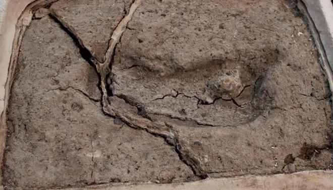 Dấu chân 15.600 năm tuổi xác nhận lịch sử loài người tại châu Mỹ
