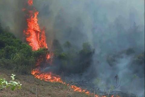 Rừng thông ở Quảng Bình cháy ngùn ngụt