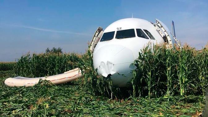 """""""Phép màu"""" cánh đồng ngô - anh hùng Nga đáp máy bay bằng bụng"""