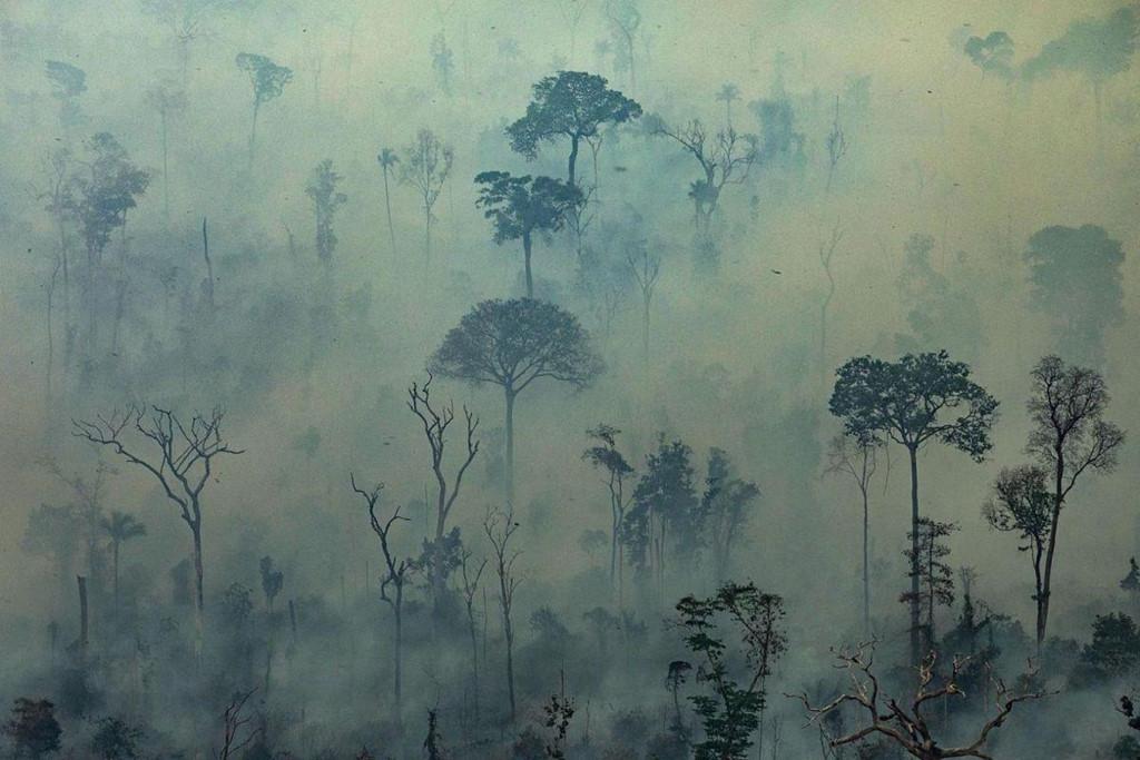 """Amazon từ rừng xanh tốt đến khung cảnh """"nhìn đâu cũng chết chóc"""""""