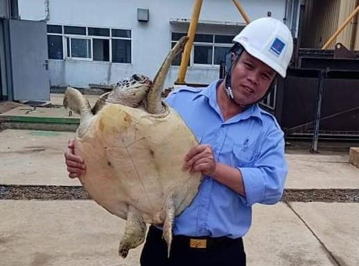 Đồi mồi nặng 12 kg mắc vào trạm bơm nước ở Hà Tĩnh