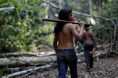 Đám cháy rừng Amazon đã được nhen lửa từ 500 năm trước