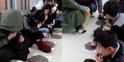 Học sinh cắn hướng dương trong lớp, thầy giáo cao tay mua 50kg về phạt