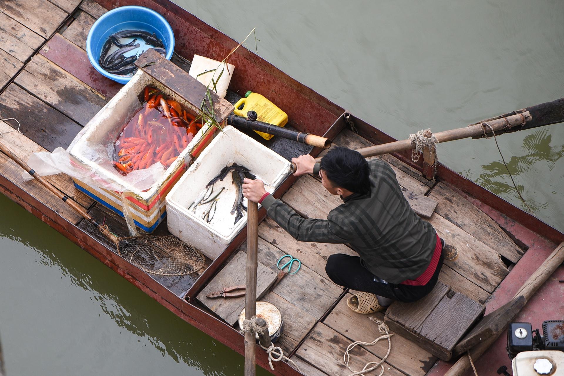 Cá chép cúng ông Táo bị chích điện